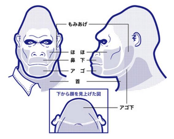ヒゲ脱毛部位の説明